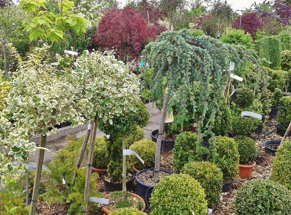 Plant-Nursery-Business.