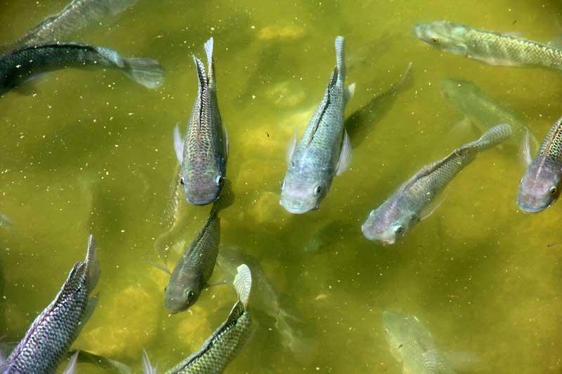 fish-farming-pond