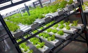 hydroponic-polyhouse-farming