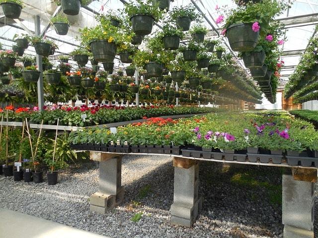 plant-nursery